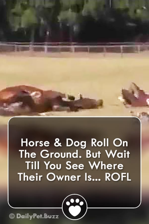 Horse & Dog Roll On The Ground. But Wait Till You See Where Their Owner Is... ROFL