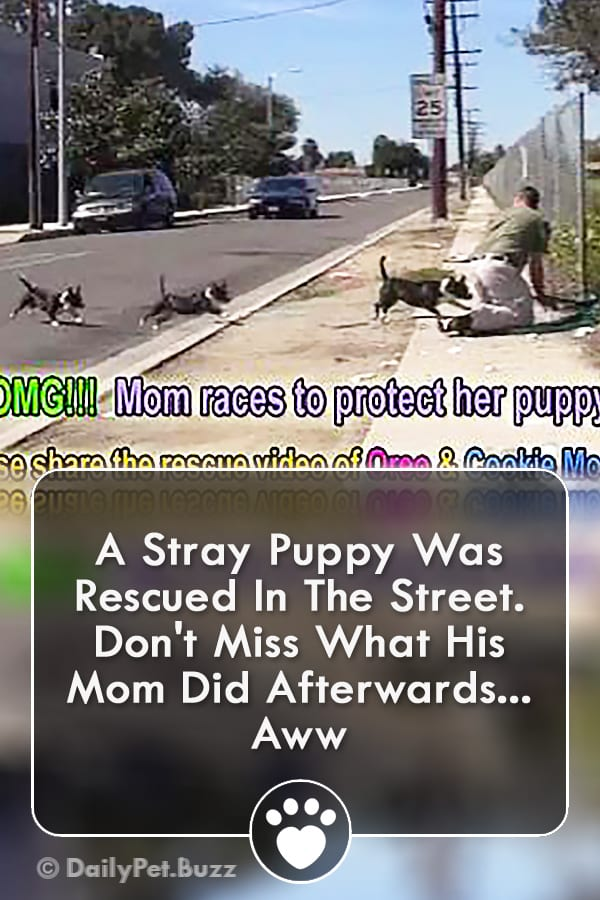 A Stray Puppy Was Rescued In The Street. Don\'t Miss What His Mom Did Afterwards... Aww