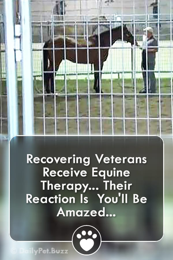 Recovering Veterans Receive Equine Therapy... Their Reaction Is  You\'ll Be Amazed...