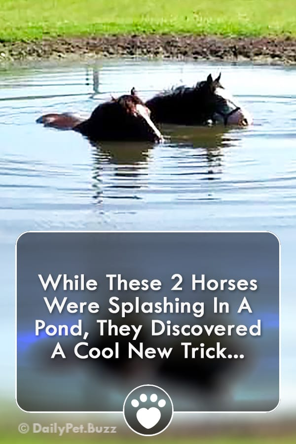 While These 2 Horses Were Splashing In A Pond, They Discovered A Cool New Trick...