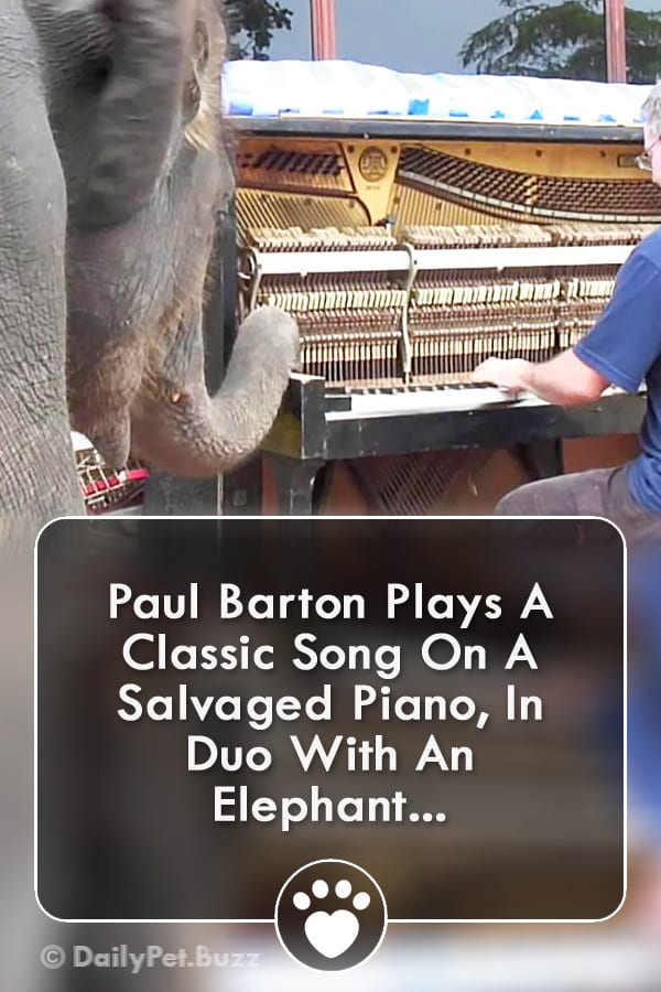 Paul Barton Plays A Classic Song On A Salvaged Piano, In Duo With An Elephant...