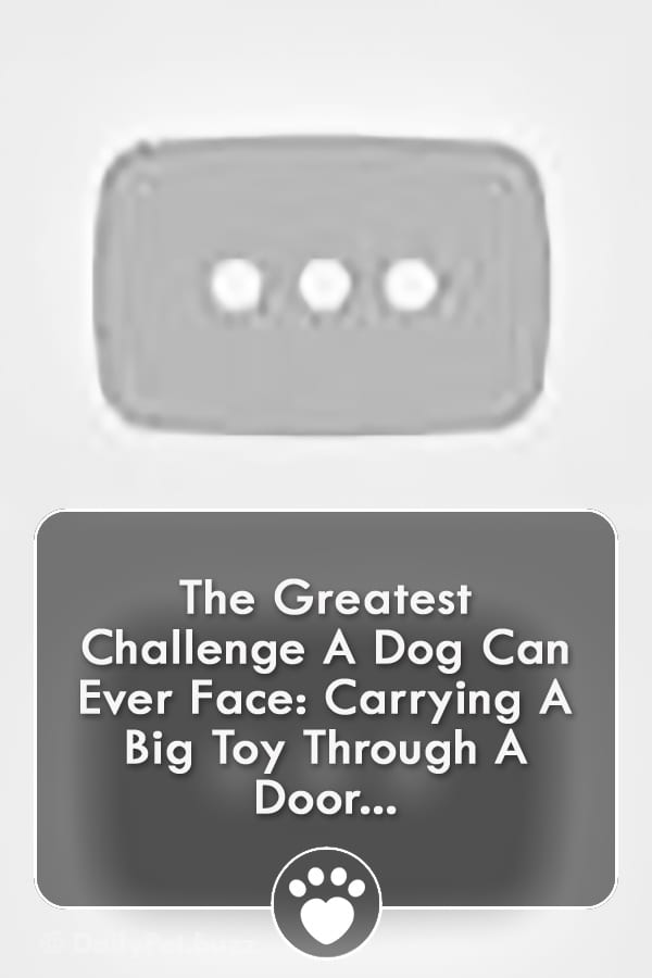 The Greatest Challenge A Dog Can Ever Face: Carrying A Big Toy Through A Door...