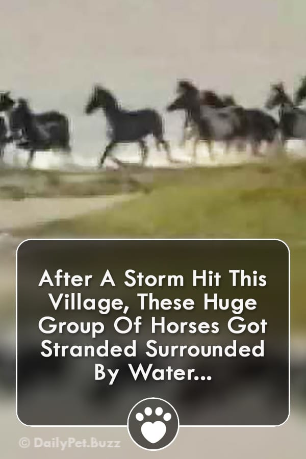 After A Storm Hit This Village, These Huge Group Of Horses Got Stranded Surrounded By Water...