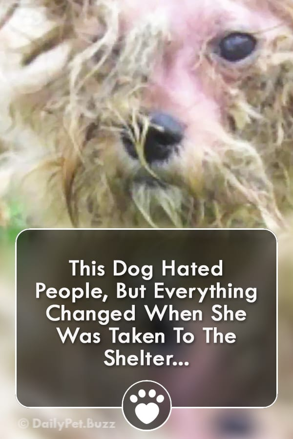 This Dog Hated People, But Everything Changed When She Was Taken To The Shelter...