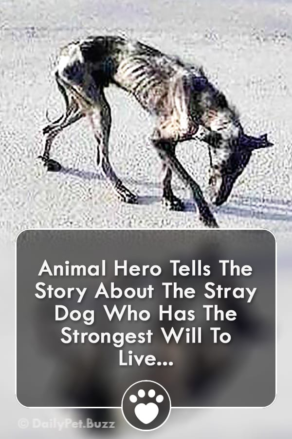 Animal Hero Tells The Story About The Stray Dog Who Has The Strongest Will To Live...