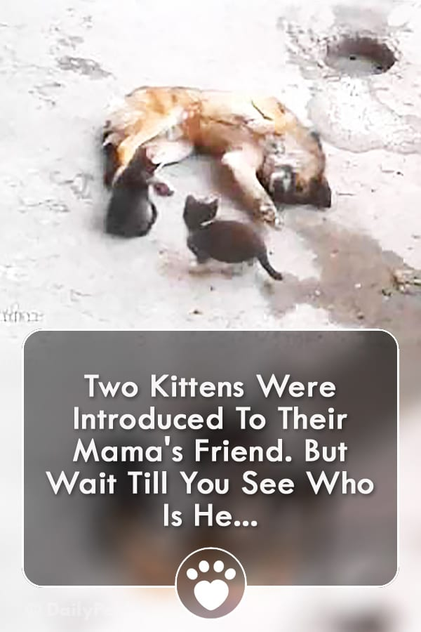 Two Kittens Were Introduced To Their Mama\'s Friend. But Wait Till You See Who Is He...