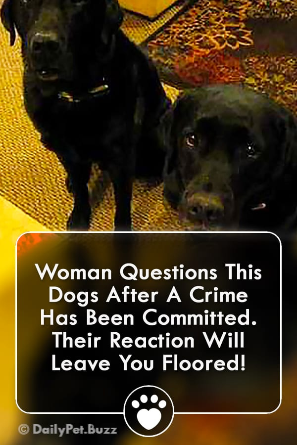 Woman Questions This Dogs After A Crime Has Been Committed. Their Reaction Will Leave You Floored!