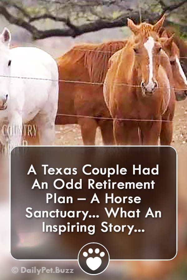 A Texas Couple Had An Odd Retirement Plan – A Horse Sanctuary... What An Inspiring Story...