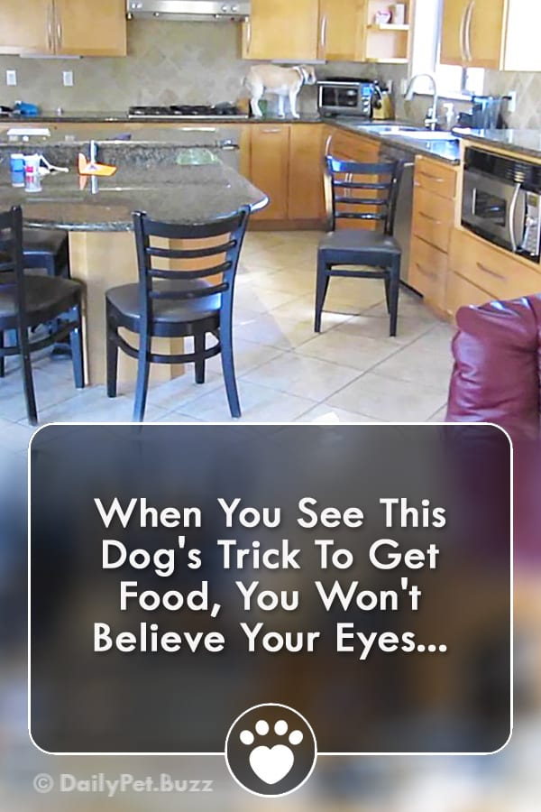 When You See This Dog\'s Trick To Get Food, You Won\'t Believe Your Eyes...