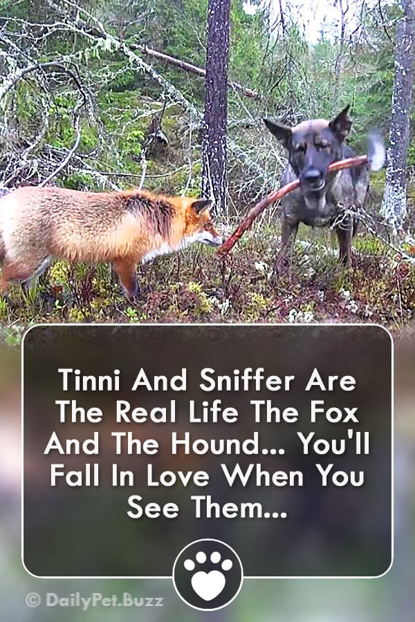 Tinni And Sniffer Are The Real Life The Fox And The Hound... You\'ll Fall In Love When You See Them...