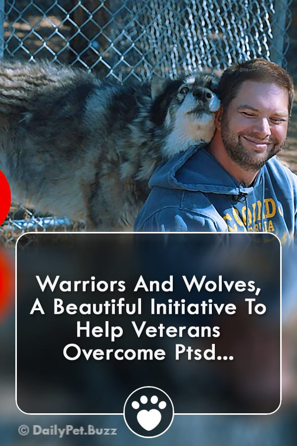 Warriors And Wolves, A Beautiful Initiative To Help Veterans Overcome Ptsd...