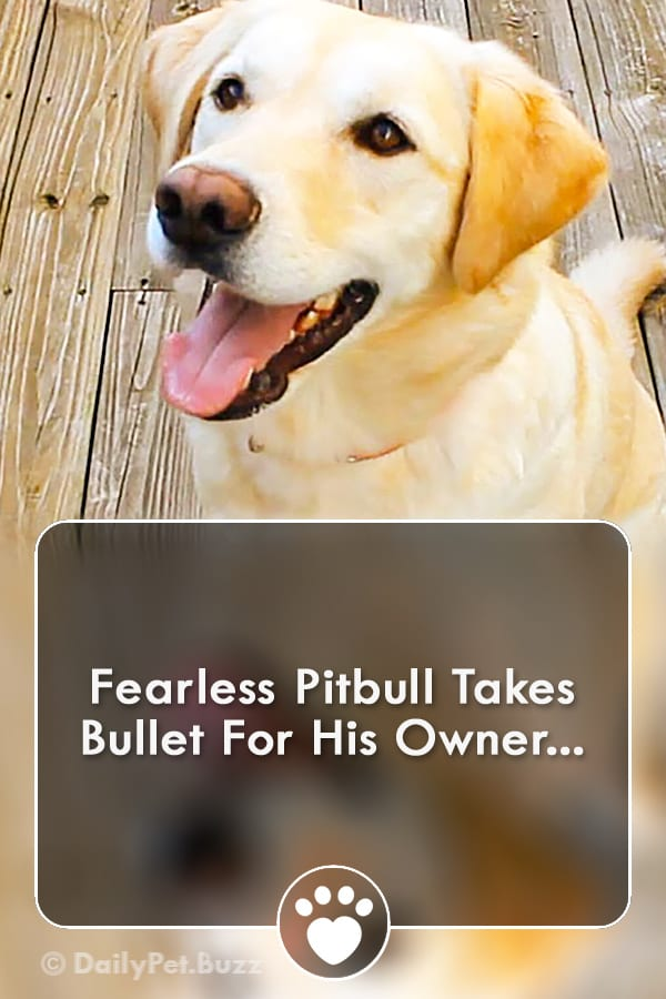 Fearless Pitbull Takes Bullet For His Owner...