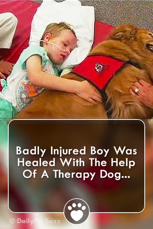Badly Injured Boy Was Healed With The Help Of A Therapy Dog...