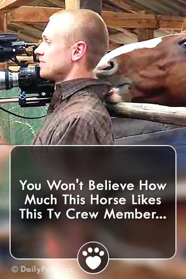 You Won\'t Believe How Much This Horse Likes This Tv Crew Member...