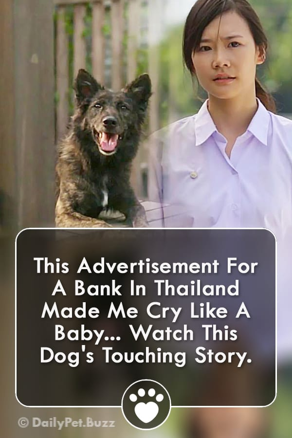 This Advertisement For A Bank In Thailand Made Me Cry Like A Baby... Watch This Dog\'s Touching Story.