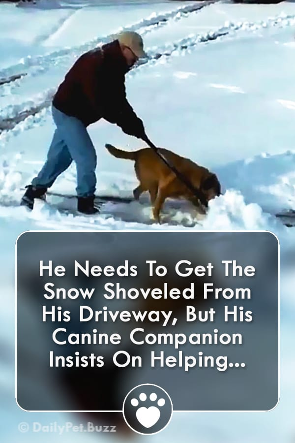 He Needs To Get The Snow Shoveled From His Driveway, But His Canine Companion Insists On Helping...