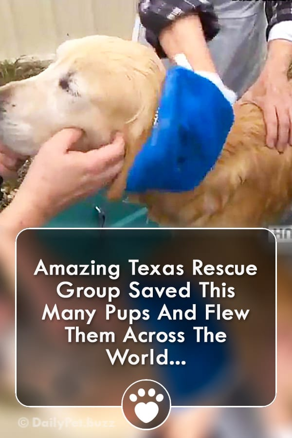 Amazing Texas Rescue Group Saved This Many Pups And Flew Them Across The World...