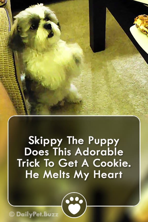 Skippy The Puppy Does This Adorable Trick To Get A Cookie. He Melts My Heart