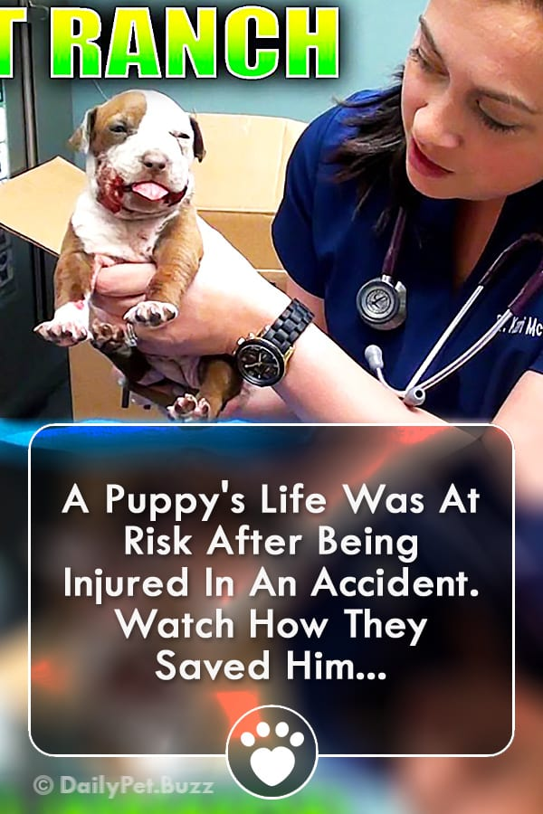 A Puppy\'s Life Was At Risk After Being Injured In An Accident. Watch How They Saved Him...