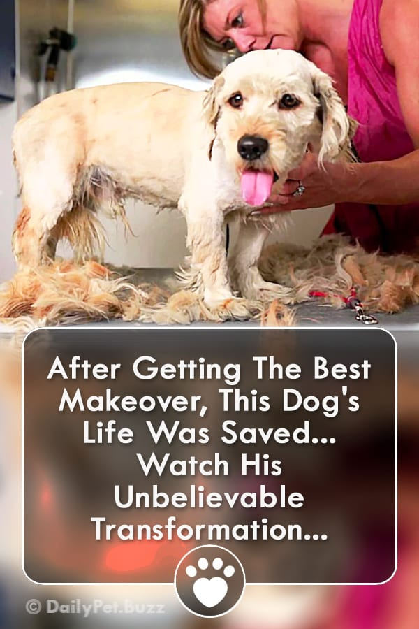After Getting The Best Makeover, This Dog\'s Life Was Saved... Watch His Unbelievable Transformation...