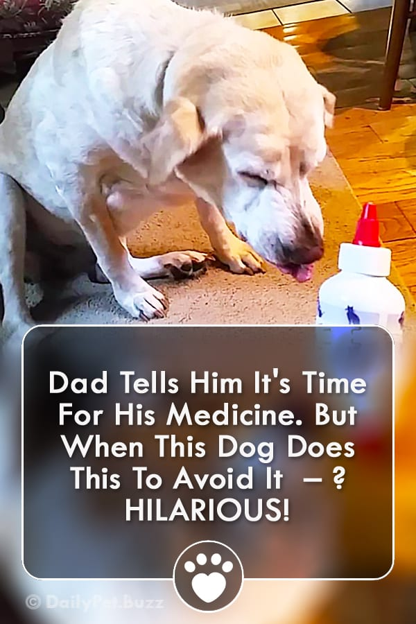 Dad Tells Him It\'s Time For His Medicine. But When This Dog Does This To Avoid It  – ? HILARIOUS!