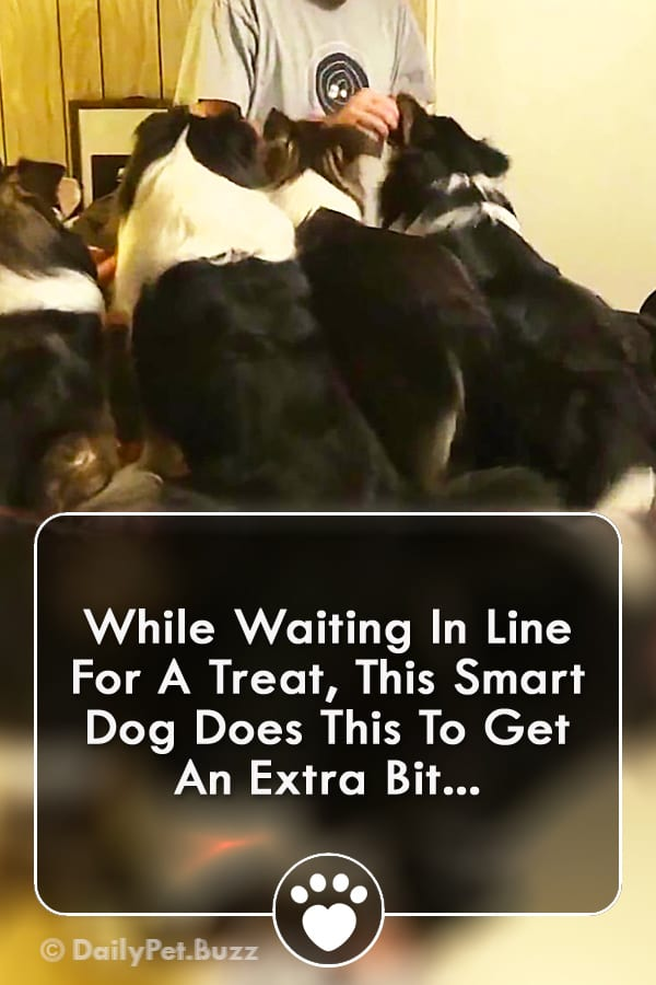 While Waiting In Line For A Treat, This Smart Dog Does This To Get An Extra Bit...