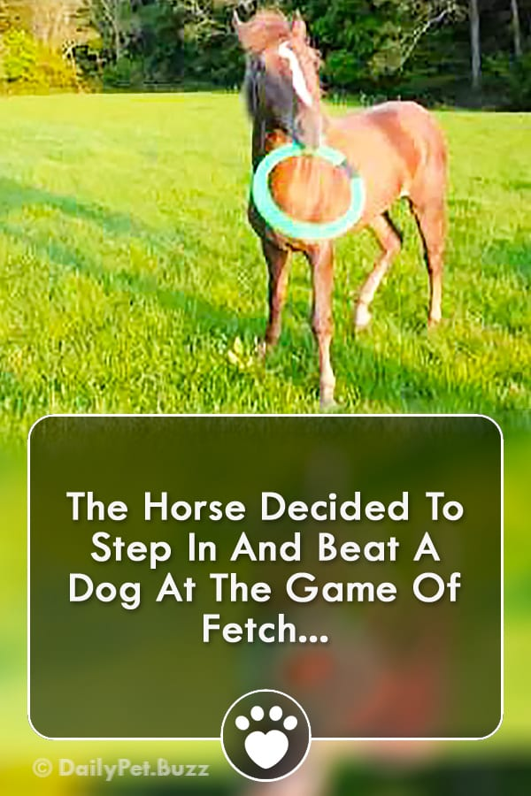 The Horse Decided To Step In And Beat A Dog At The Game Of Fetch...