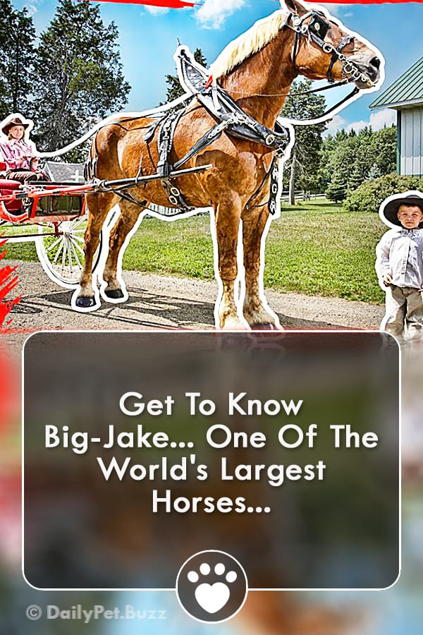 Get To Know Big-Jake... One Of The World\'s Largest Horses...