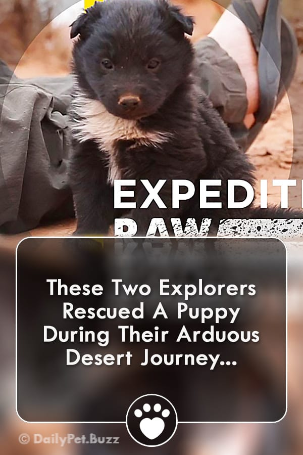 These Two Explorers Rescued A Puppy During Their Arduous Desert Journey...