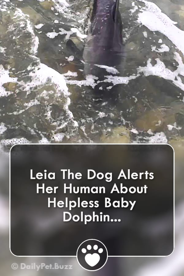 Leia The Dog Alerts Her Human About Helpless Baby Dolphin...