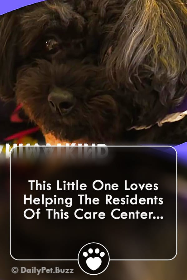 This Little One Loves Helping The Residents Of This Care Center...