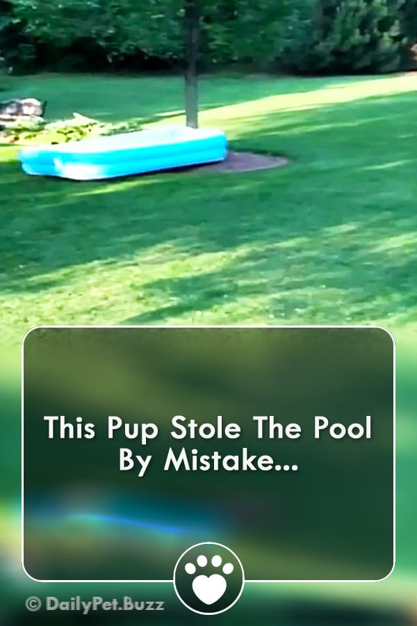 This Pup Stole The Pool By Mistake...