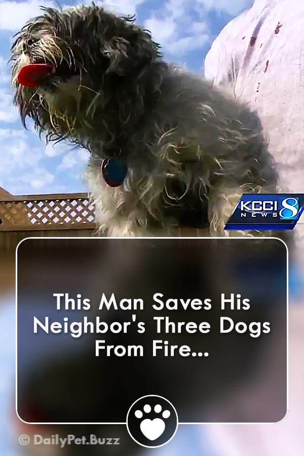 This Man Saves His Neighbor\'s Three Dogs From Fire...