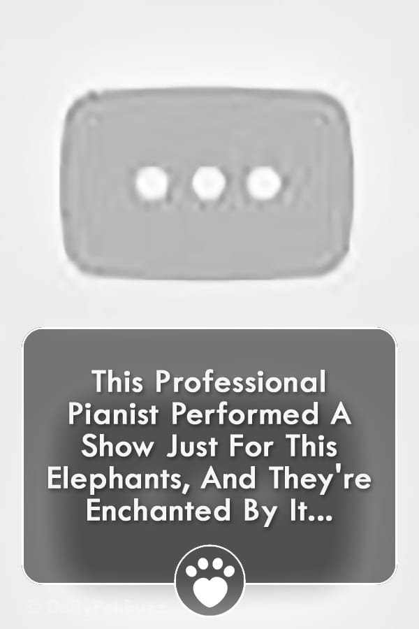 This Professional Pianist Performed A Show Just For This Elephants, And They\'re Enchanted By It...