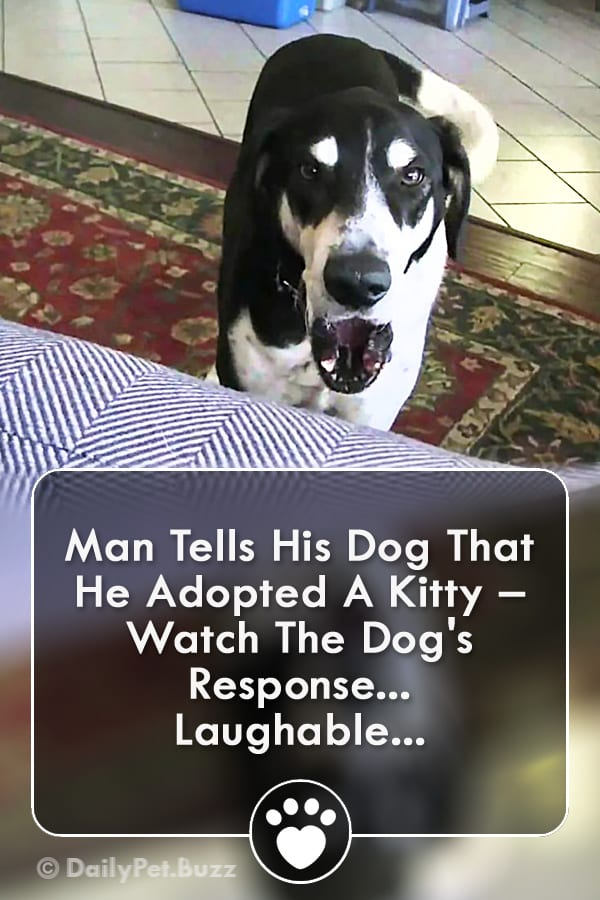 Man Tells His Dog That He Adopted A Kitty – Watch The Dog\'s Response... Laughable...