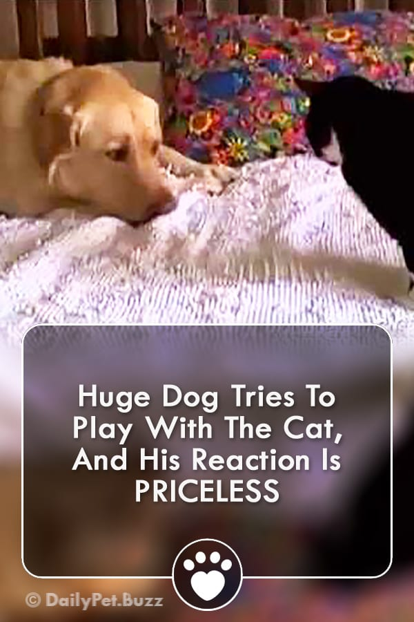 Huge Dog Tries To Play With The Cat, And His Reaction Is PRICELESS
