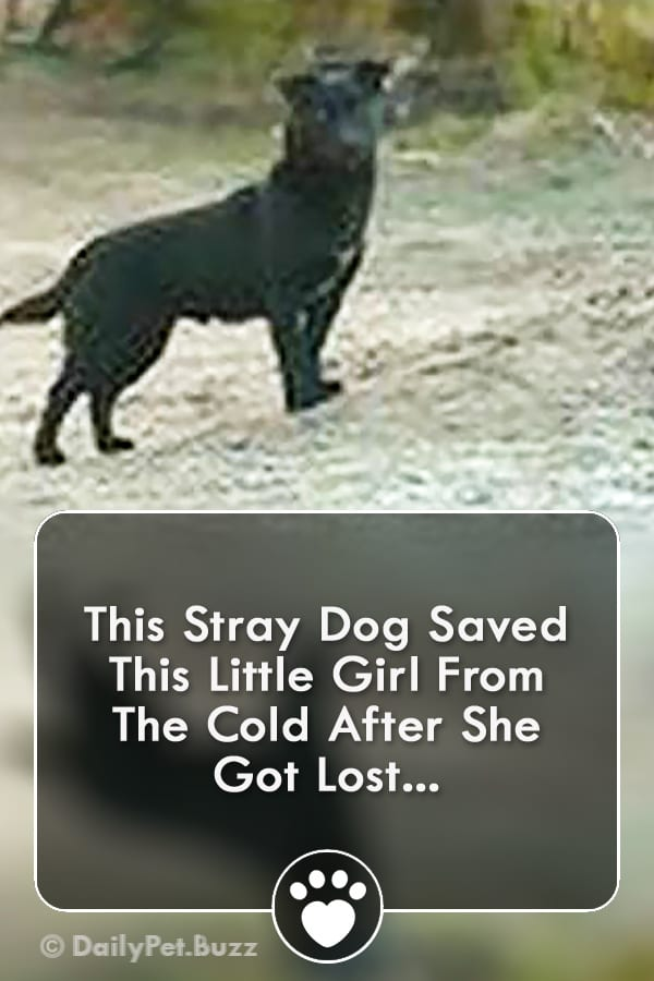 This Stray Dog Saved This Little Girl From The Cold After She Got Lost...