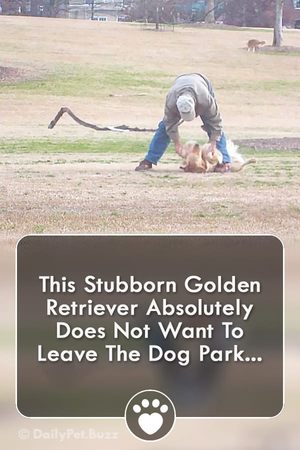 This Stubborn Golden Retriever Absolutely Does Not Want To Leave The Dog Park...