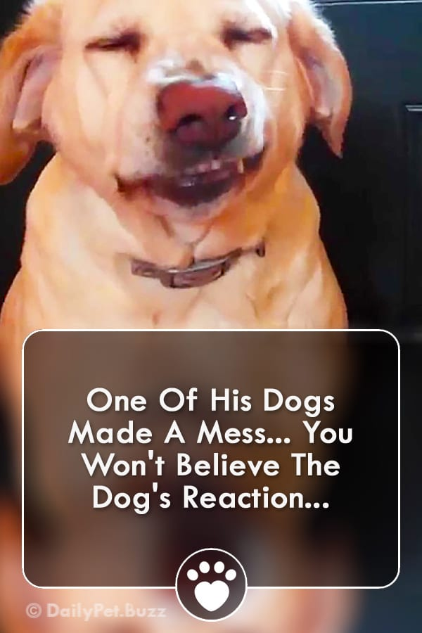 One Of His Dogs Made A Mess... You Won\'t Believe The Dog\'s Reaction...
