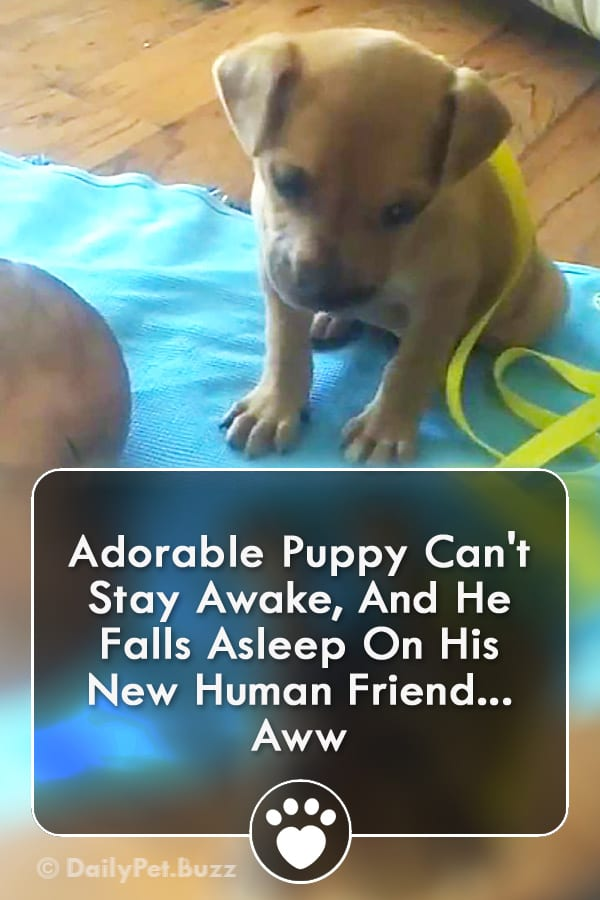 Adorable Puppy Can\'t Stay Awake, And He Falls Asleep On His New Human Friend... Aww