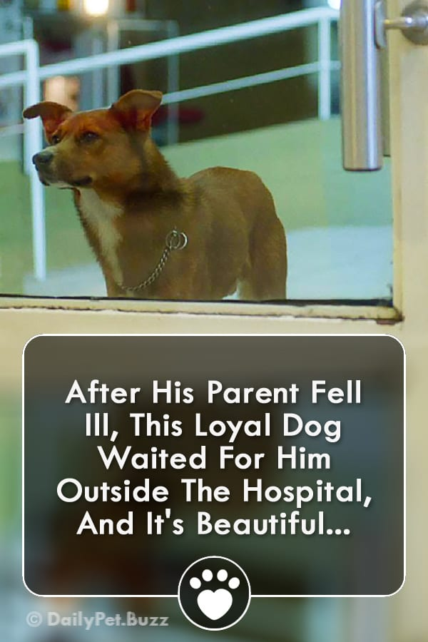 After His Parent Fell Ill, This Loyal Dog Waited For Him Outside The Hospital, And It\'s Beautiful...