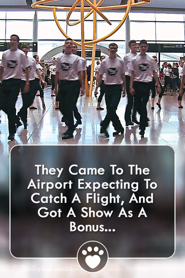 They Came To The Airport Expecting To Catch A Flight, And Got A Show As A Bonus...