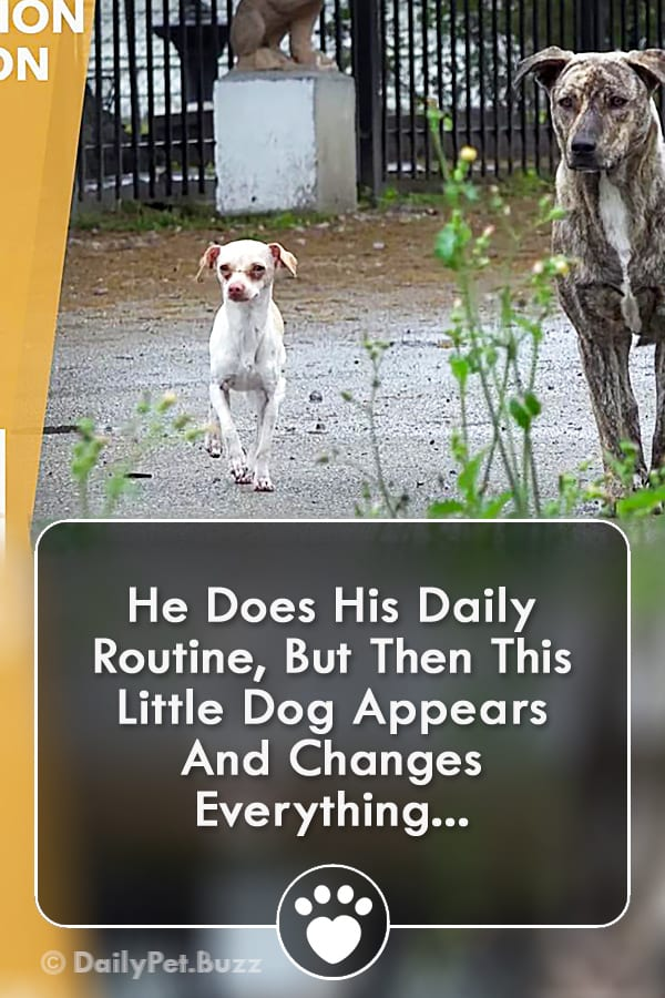He Does His Daily Routine, But Then This Little Dog Appears And Changes Everything...