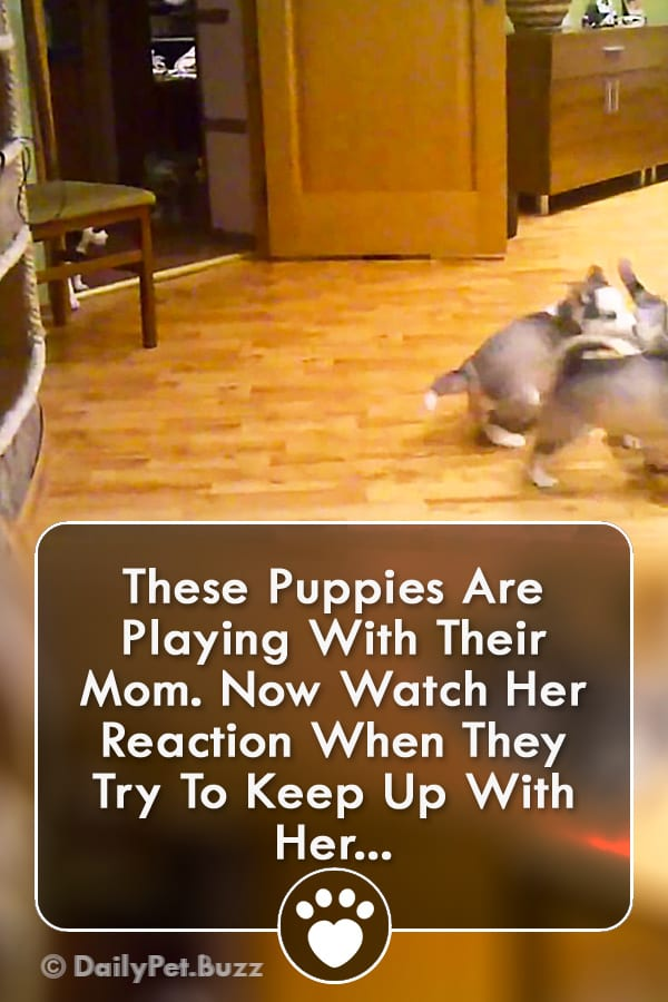 These Puppies Are Playing With Their Mom. Now Watch Her Reaction When They Try To Keep Up With Her...