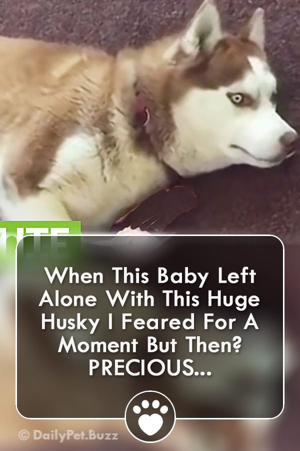 When This Baby Left Alone With This Huge Husky I Feared For A Moment But Then? PRECIOUS...