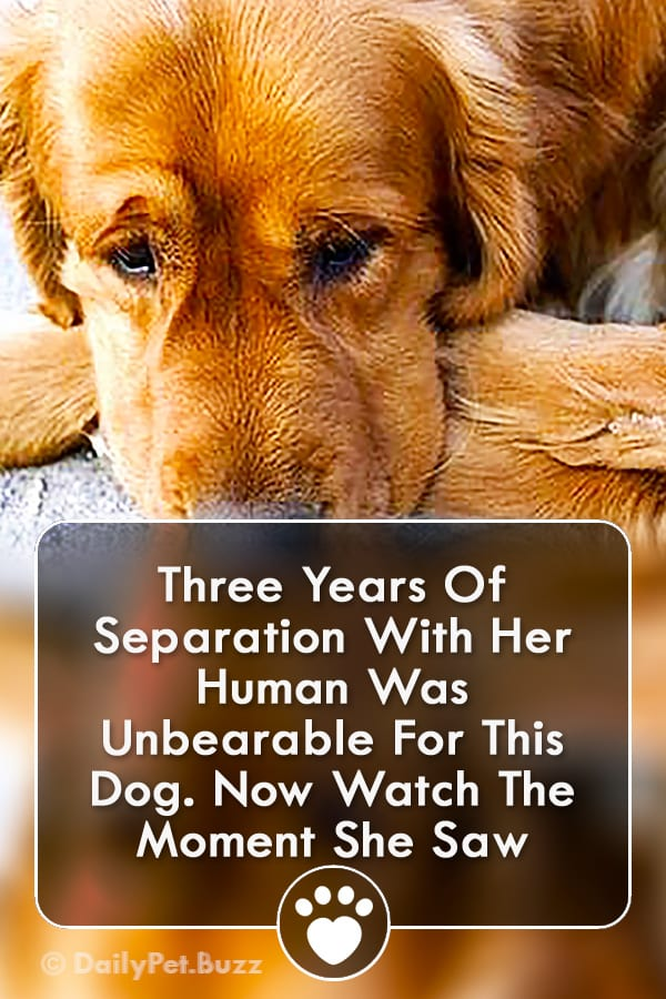 Three Years Of Separation With Her Human Was Unbearable For This Dog. Now Watch The Moment She Saw Him...
