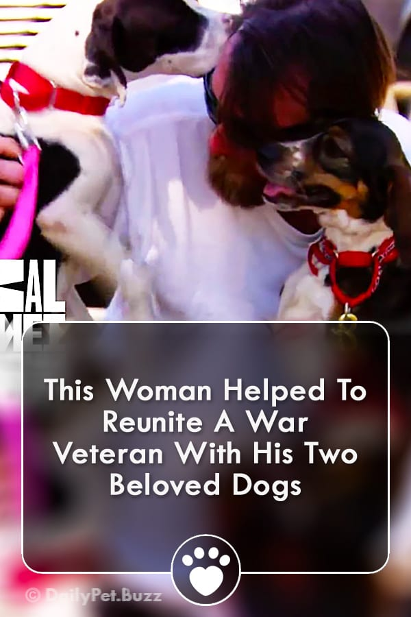 This Woman Helped To Reunite A War Veteran With His Two Beloved Dogs