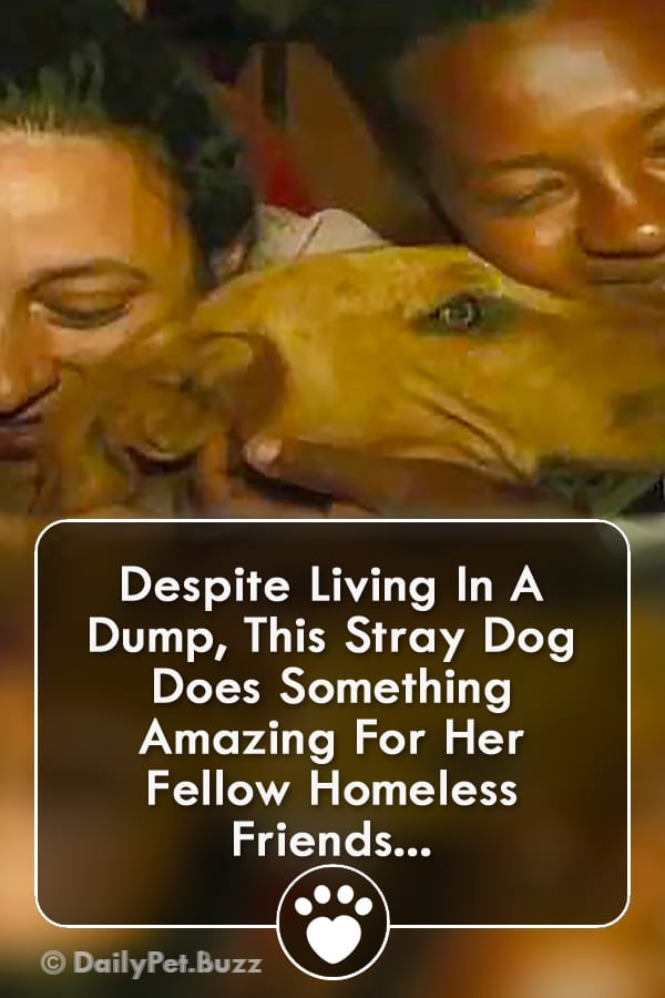 Despite Living In A Dump, This Stray Dog Does Something Amazing For Her Fellow Homeless Friends...