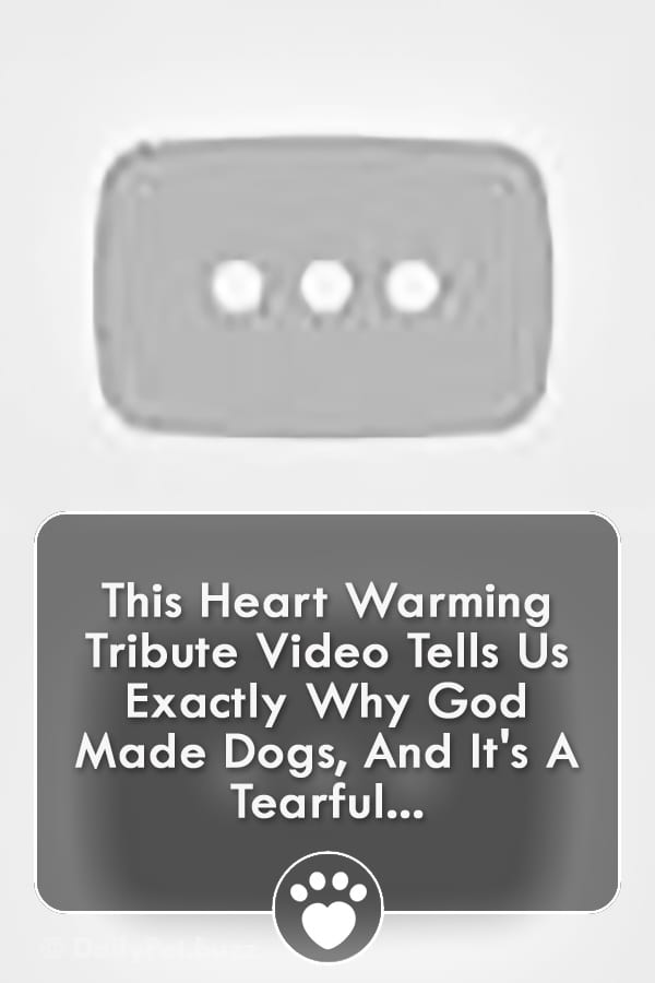 This Heart Warming Tribute Video Tells Us Exactly Why God Made Dogs, And It\'s A Tearful...