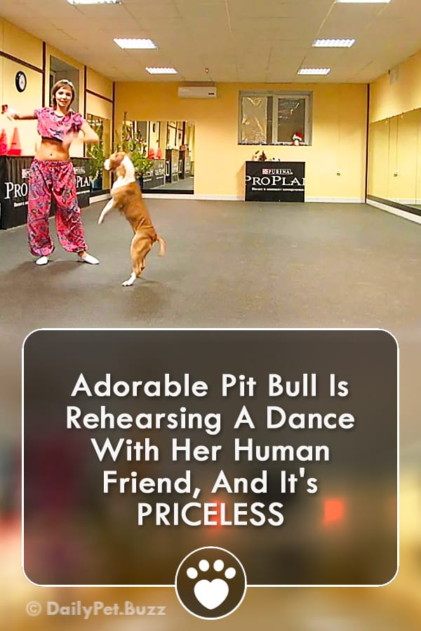 Adorable Pit Bull Is Rehearsing A Dance With Her Human Friend, And It\'s PRICELESS